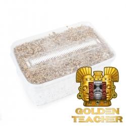 Paddo Growkits Cubensis Golden Teacher - Magischer Pilz Grow kit € 27,95 Next Level Smartshop Webshop